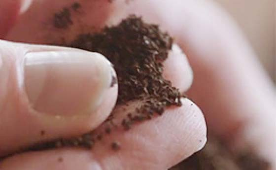 Fingers feeling texture of coffee grounds